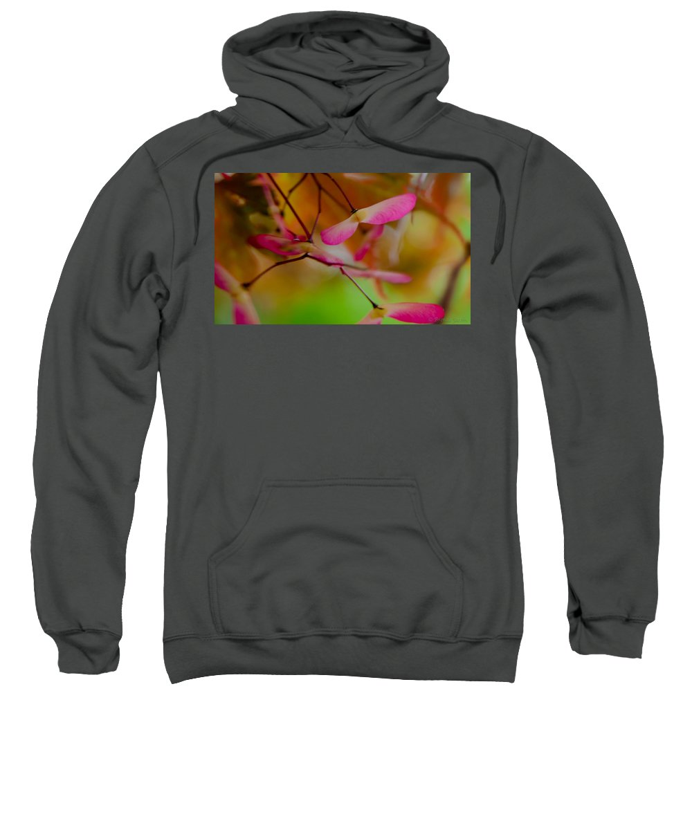 Japanese Maple Sweatshirt featuring the photograph Japanese Maple Seedling by Brenda Jacobs