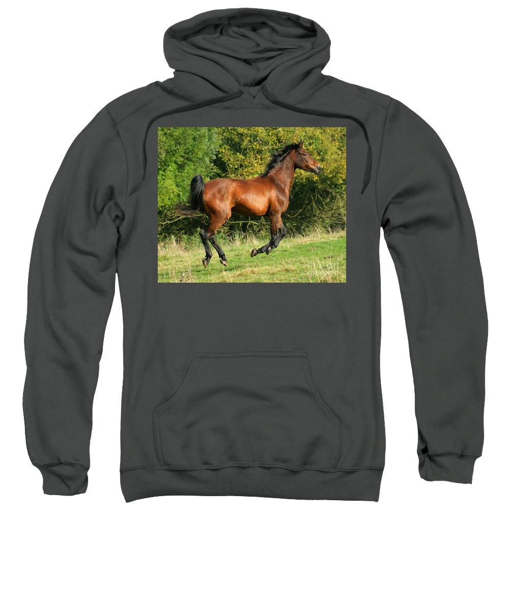 Horse Sweatshirt featuring the photograph Jump Jump Jump by Angel Ciesniarska