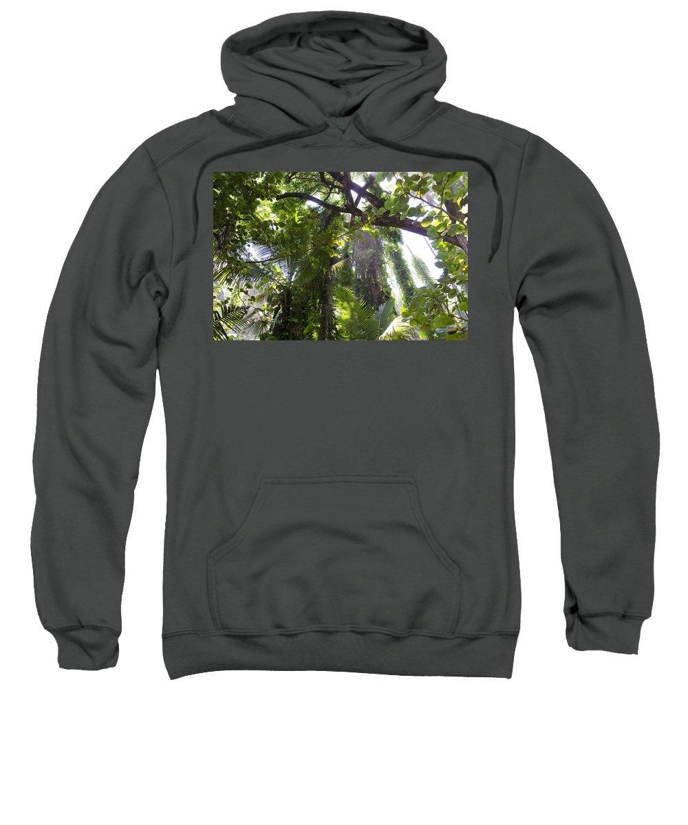 Hawaii Sweatshirt featuring the photograph Jungle Canopy by Daniel Murphy
