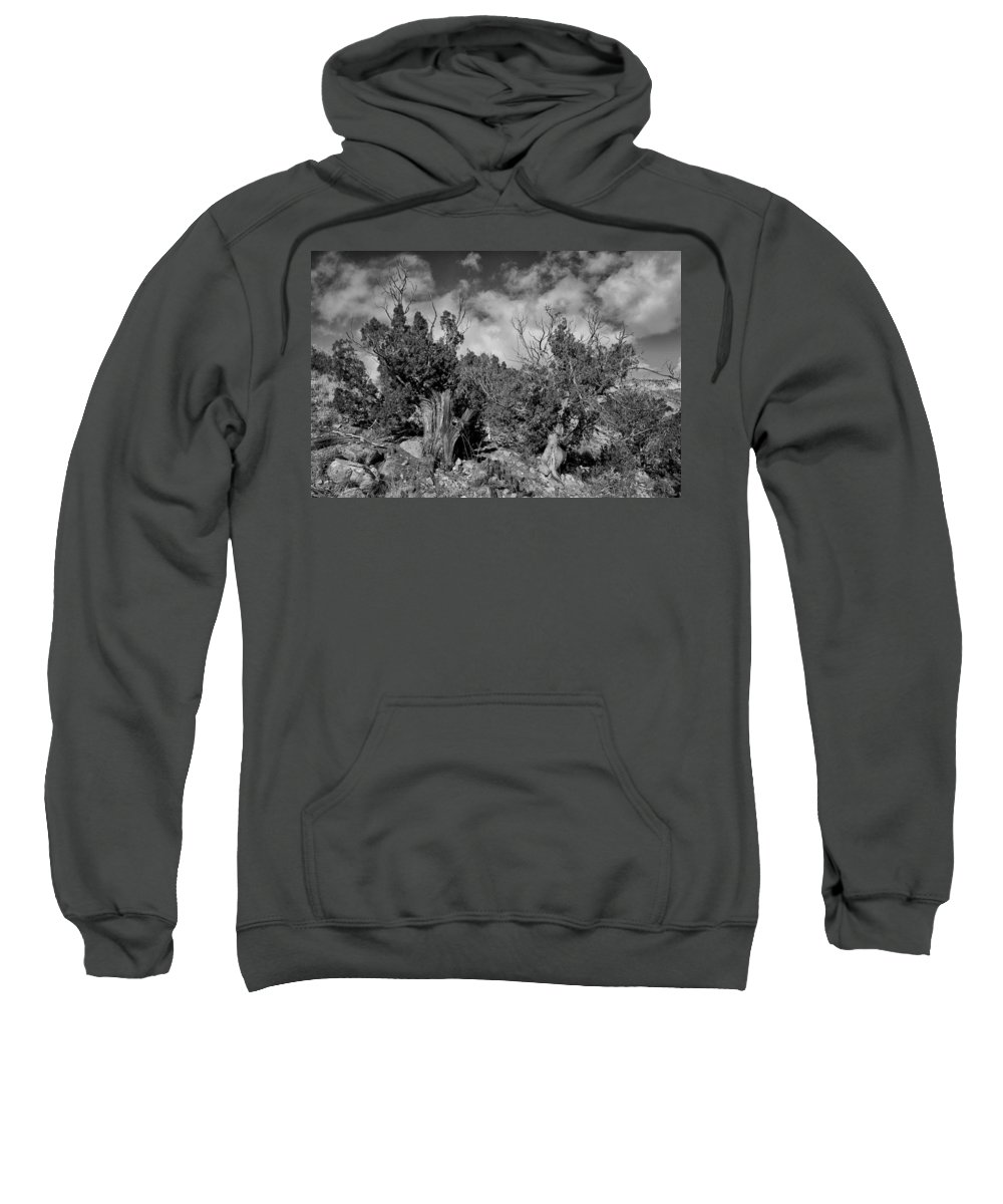 Juniper Sweatshirt featuring the photograph Juniper Trees At The Ghost Ranch Black And White by Greg Kluempers
