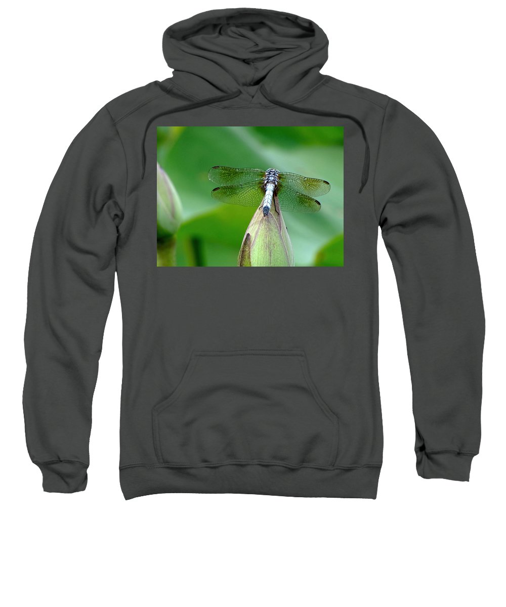 Dragonfly Sweatshirt featuring the photograph Just Visiting by Jennifer Wheatley Wolf
