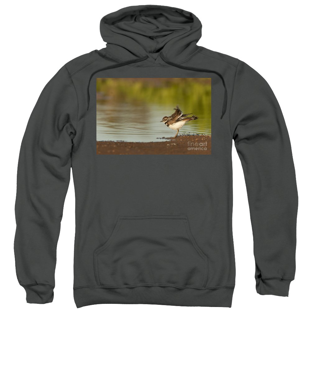 Killdeer Sweatshirt featuring the photograph Killdeer Fluffing Up On The Shore by Bryan Keil
