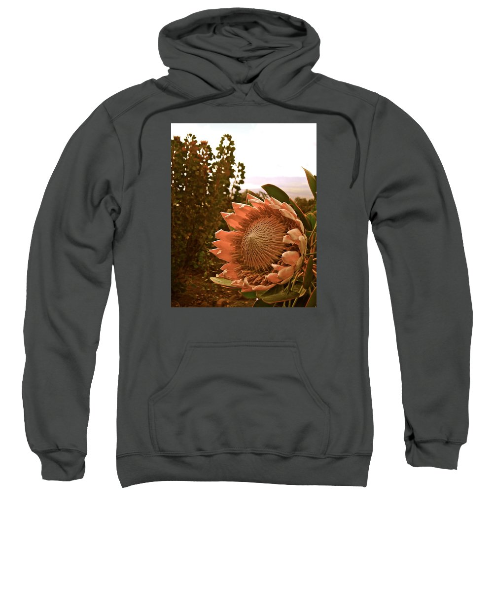 Flowers Sweatshirt featuring the photograph King Protea by Esther Wilhelm Pridgen