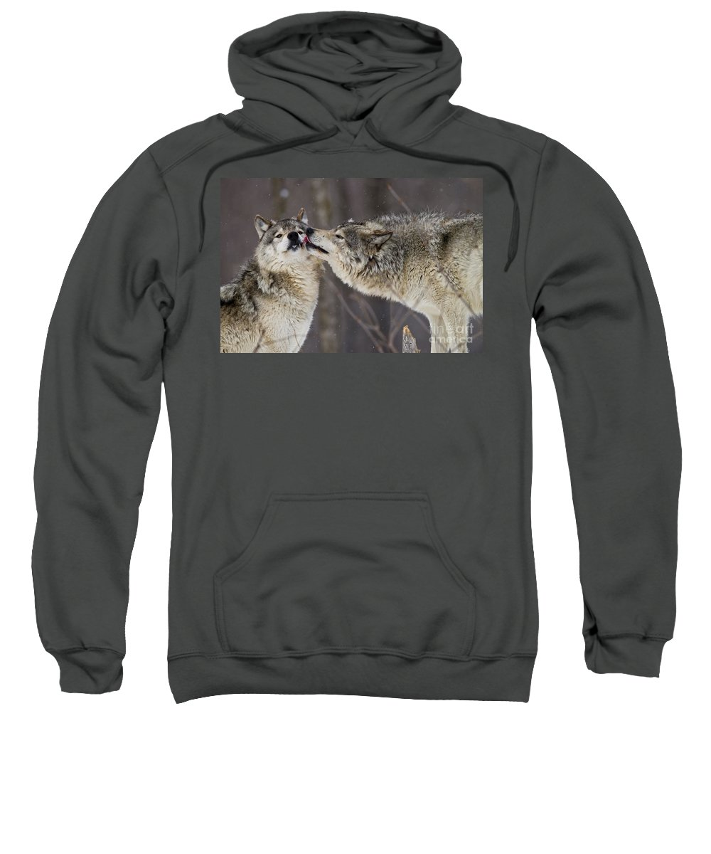 Timber Wolf Photography Sweatshirt featuring the photograph Kissy Face by Wolves Only