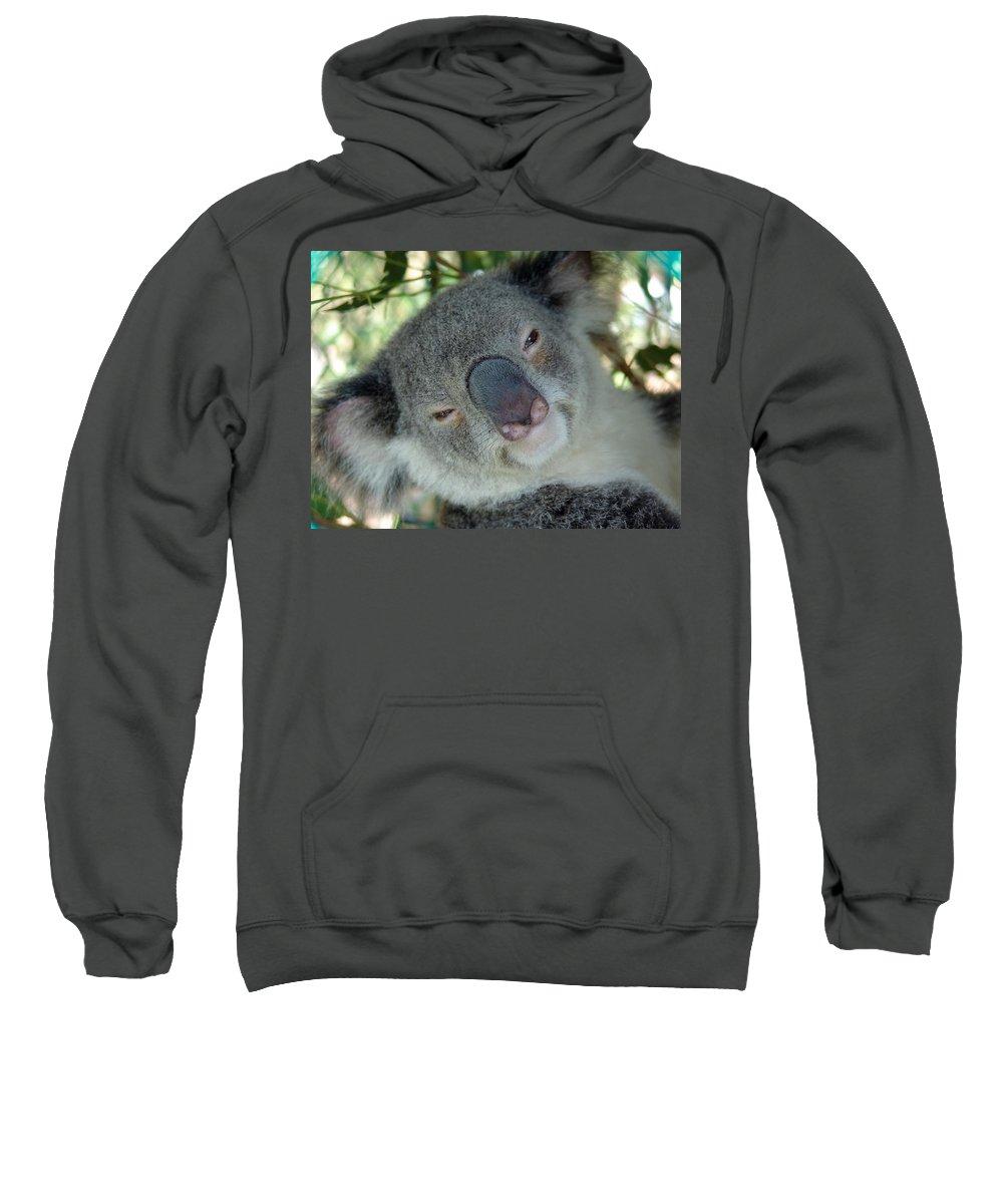 Koala Sweatshirt featuring the photograph Koala Face by Ian Mcadie