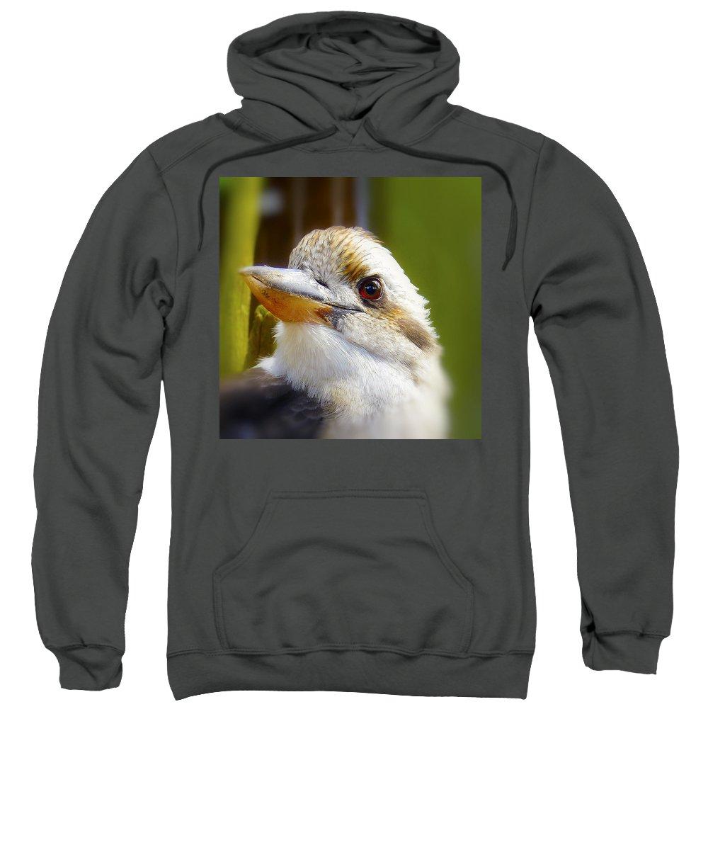 Beak Sweatshirt featuring the photograph Kokaburra by Ingrid Smith-Johnsen