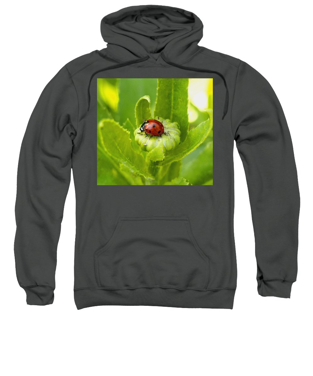 Nature Sweatshirt featuring the photograph Lady Bug In The Garden by Amy McDaniel