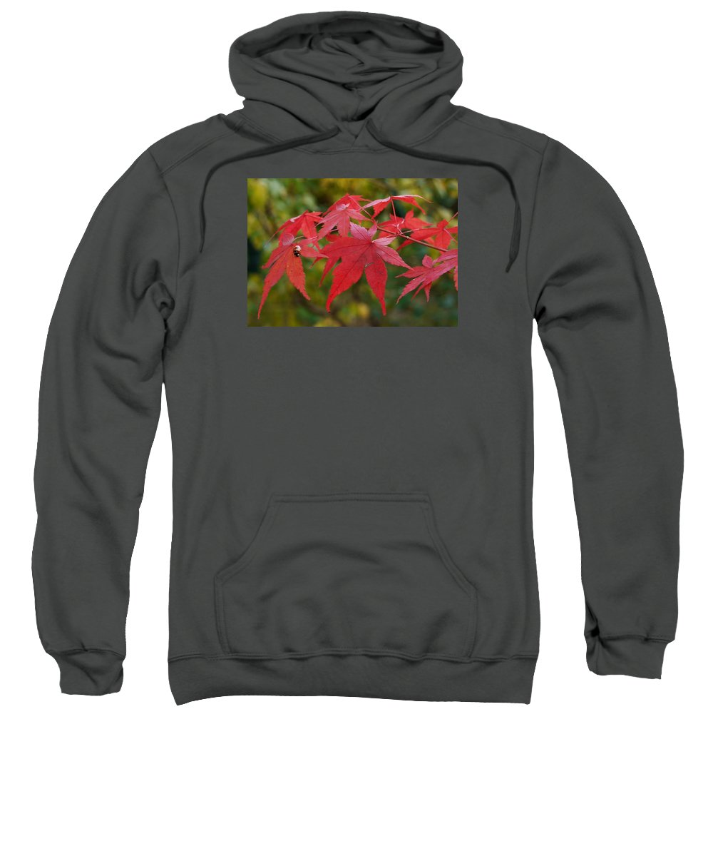 Japanese Acer Sweatshirt featuring the photograph Ladybird With Autumn Leaves by Wendy Le Ber