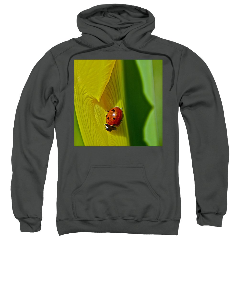 Ladybugs Sweatshirt featuring the photograph Ladybug Macro by Bill Owen