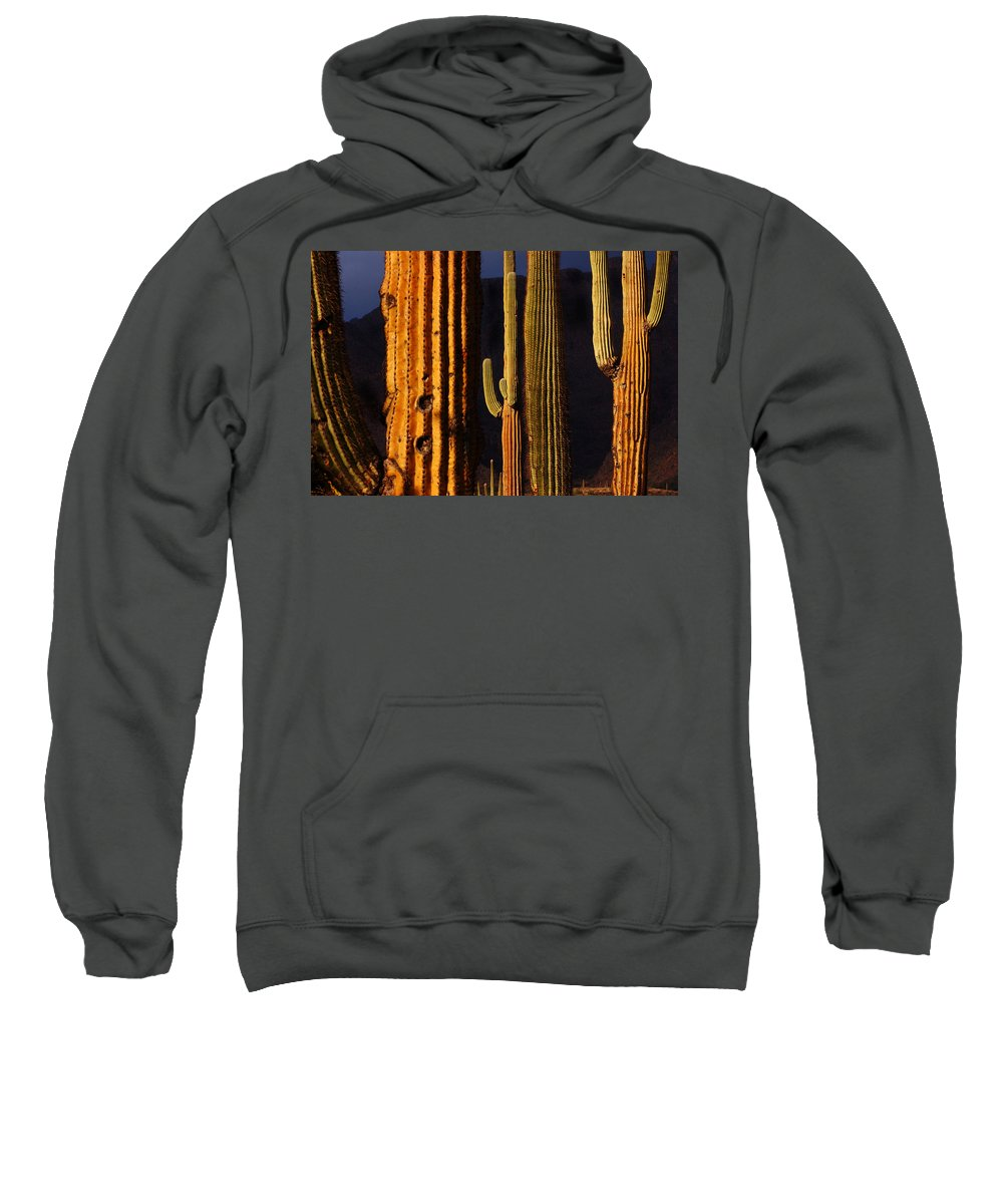 Saguaro Cactus Sonoran Desert Phoenix Arizona Carnegiea Cactus Cacti Scottsdale Arizona Tucson Arizona Superstition Wilderness South Side Desert Storm Sweatshirt featuring the photograph Last Light by Reed Rahn