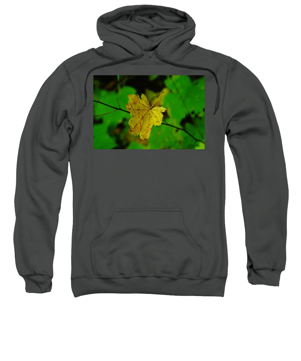 Leaves Sweatshirt featuring the photograph Leaf Caught On A Branch by Jeff Swan