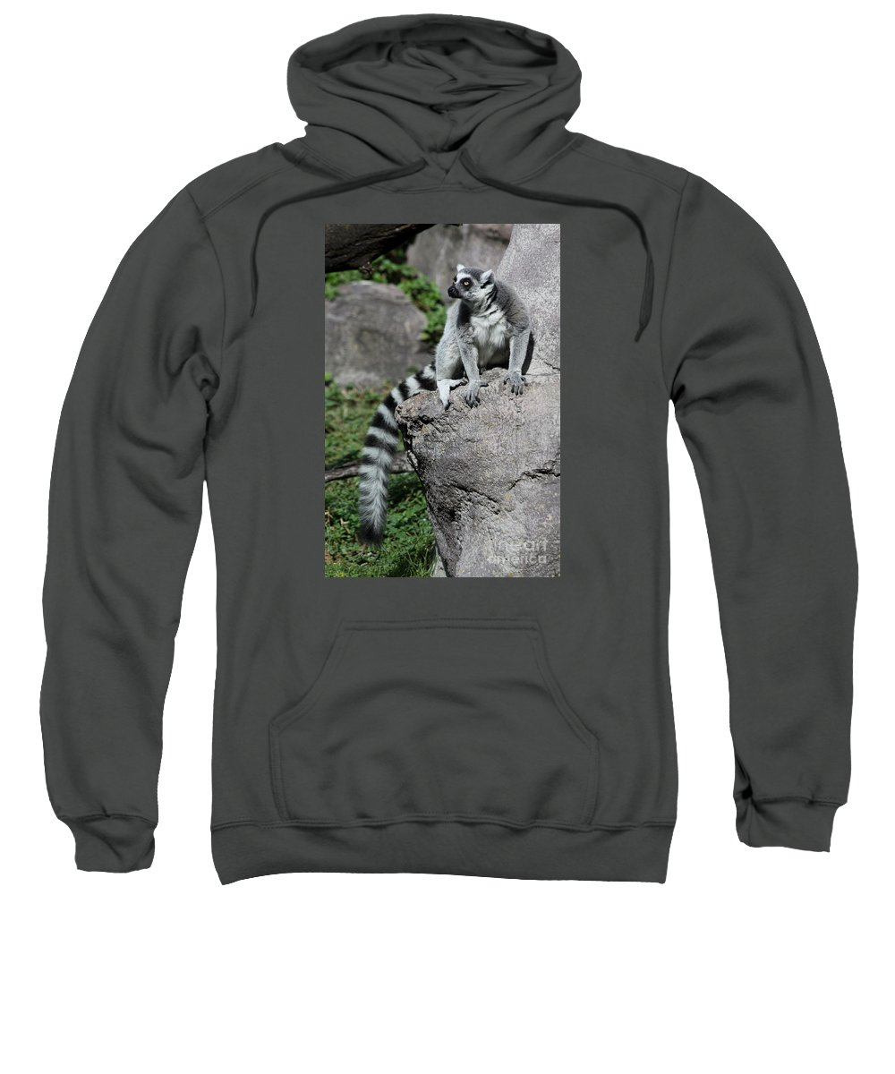 Ring Tailed Lemur Sweatshirt featuring the photograph Lemur Pose by Christiane Schulze Art And Photography
