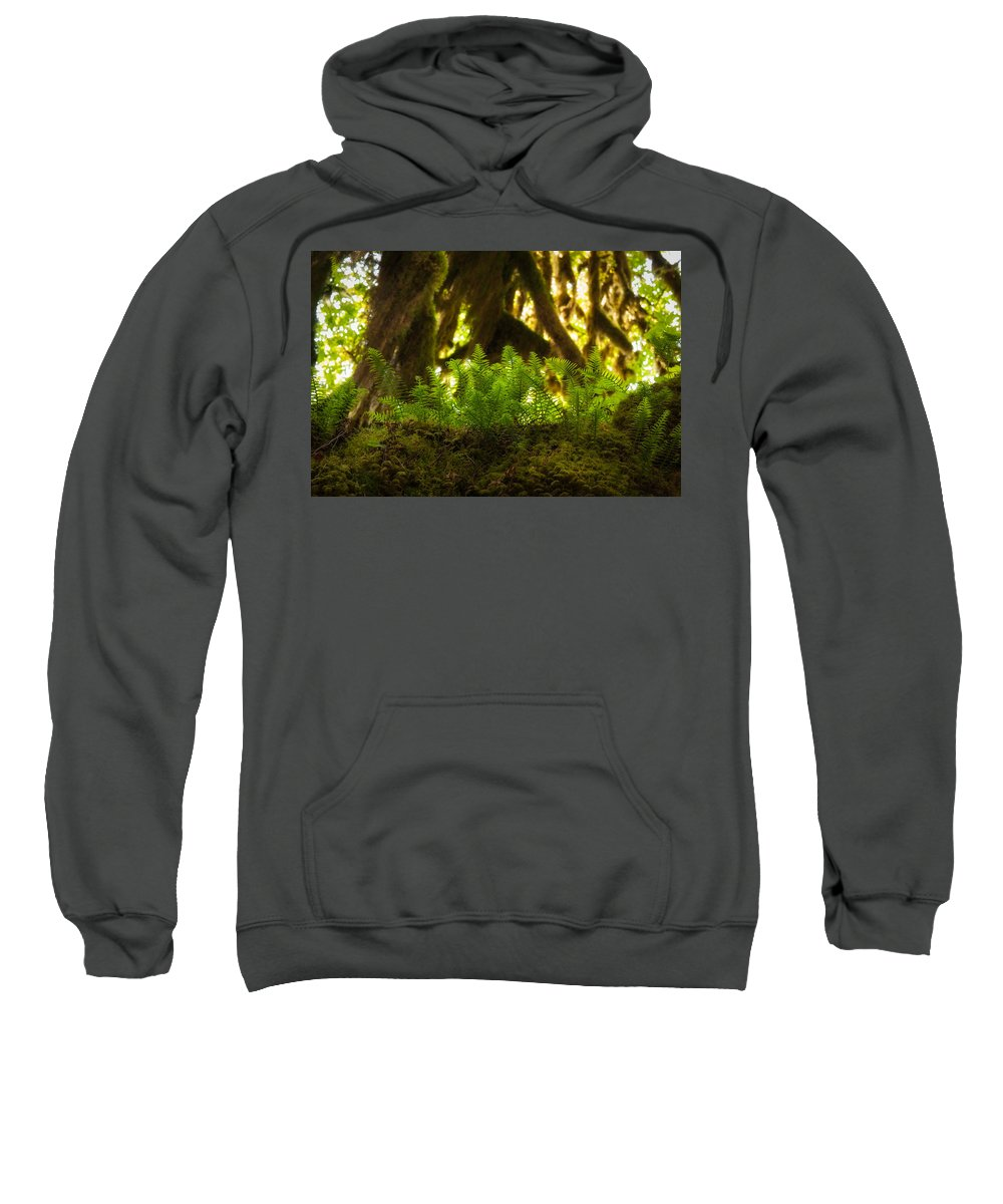 Hoh Rain Forest Sweatshirt featuring the photograph Licorice Fern by Rich Leighton
