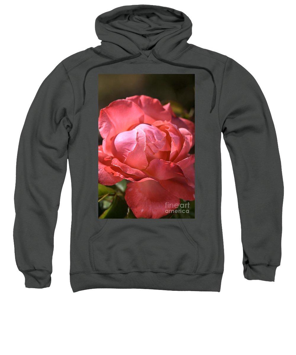 Light Sweatshirt featuring the photograph Light On Rose by Joy Watson