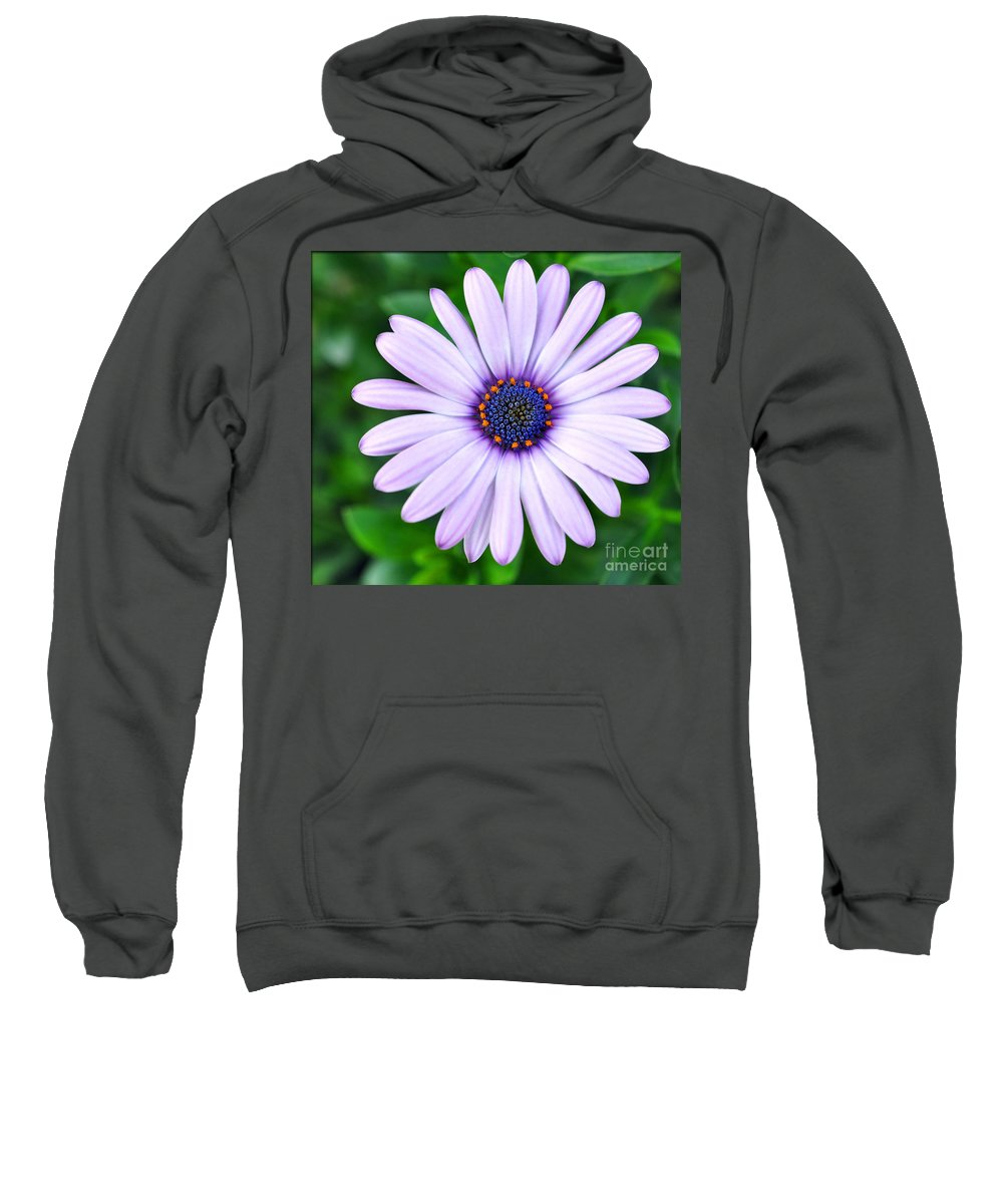 Spring Sweatshirt featuring the photograph Light Purple Daisy by Brittany Horton