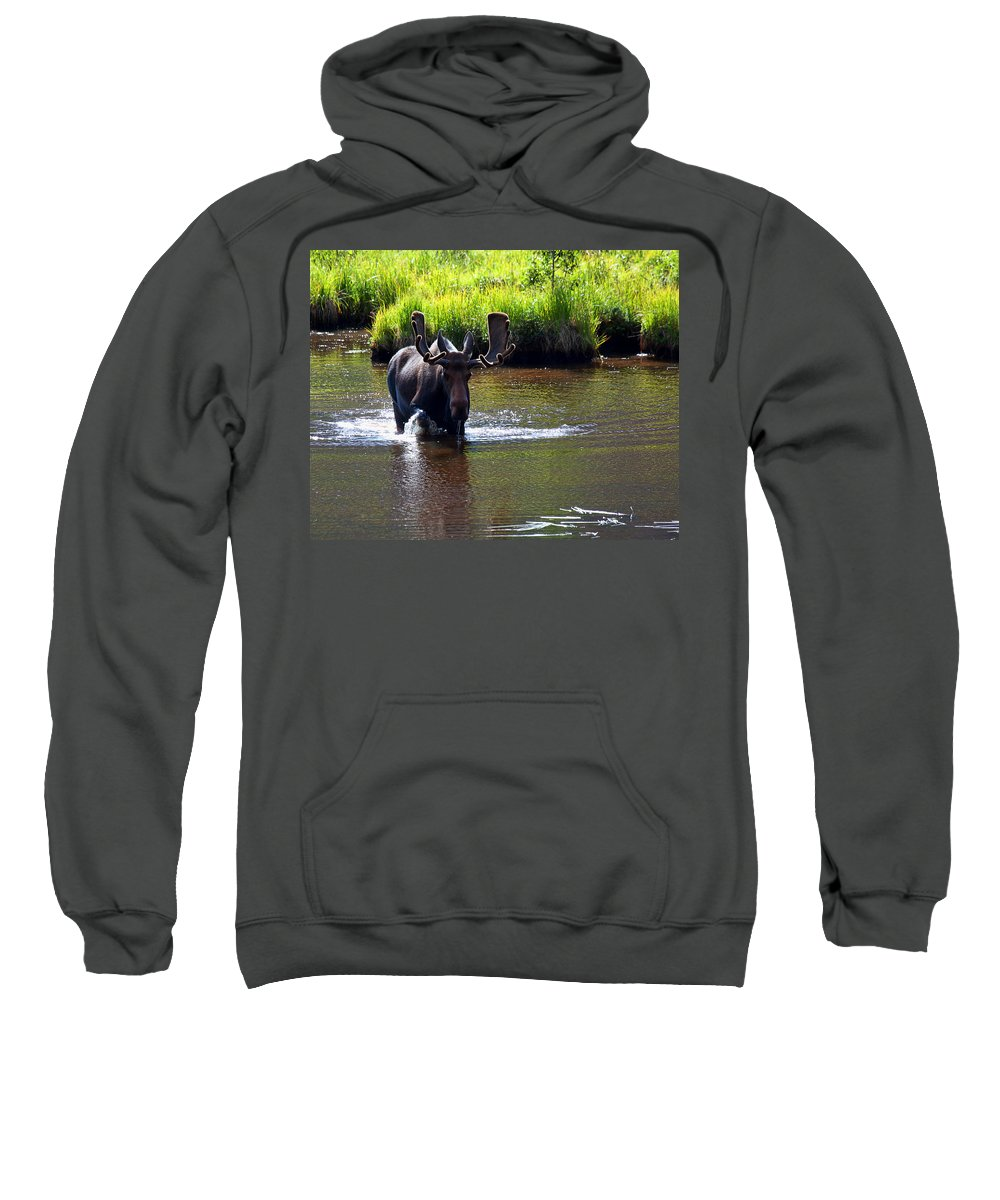 Moose Photograph Sweatshirt featuring the photograph Like A Bull In A China Clloset by Jim Garrison