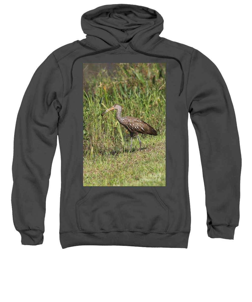 Limpkin Sweatshirt featuring the photograph Limpkin With Apple Snail by Christiane Schulze Art And Photography