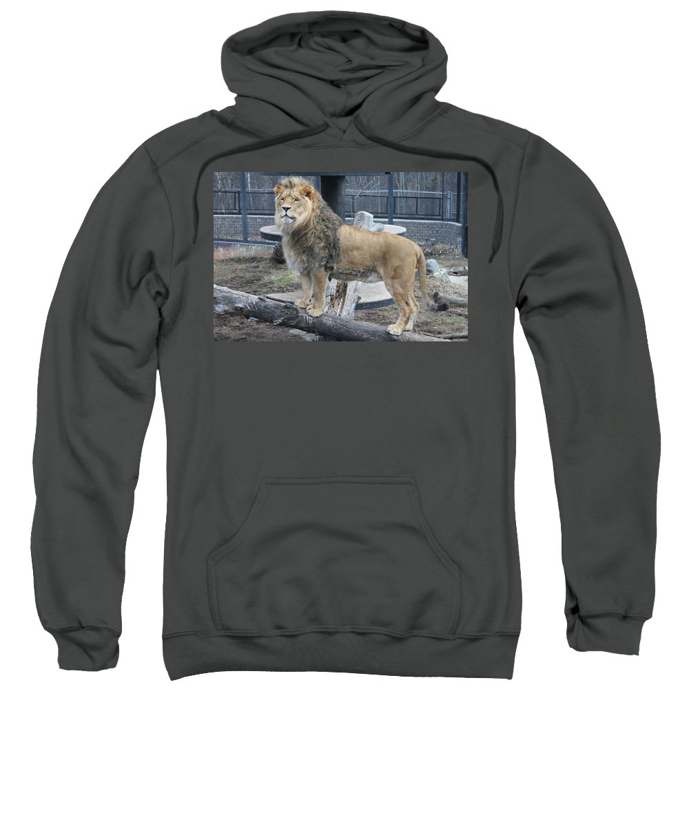Lion Sweatshirt featuring the photograph Lion King by Ruth Kamenev