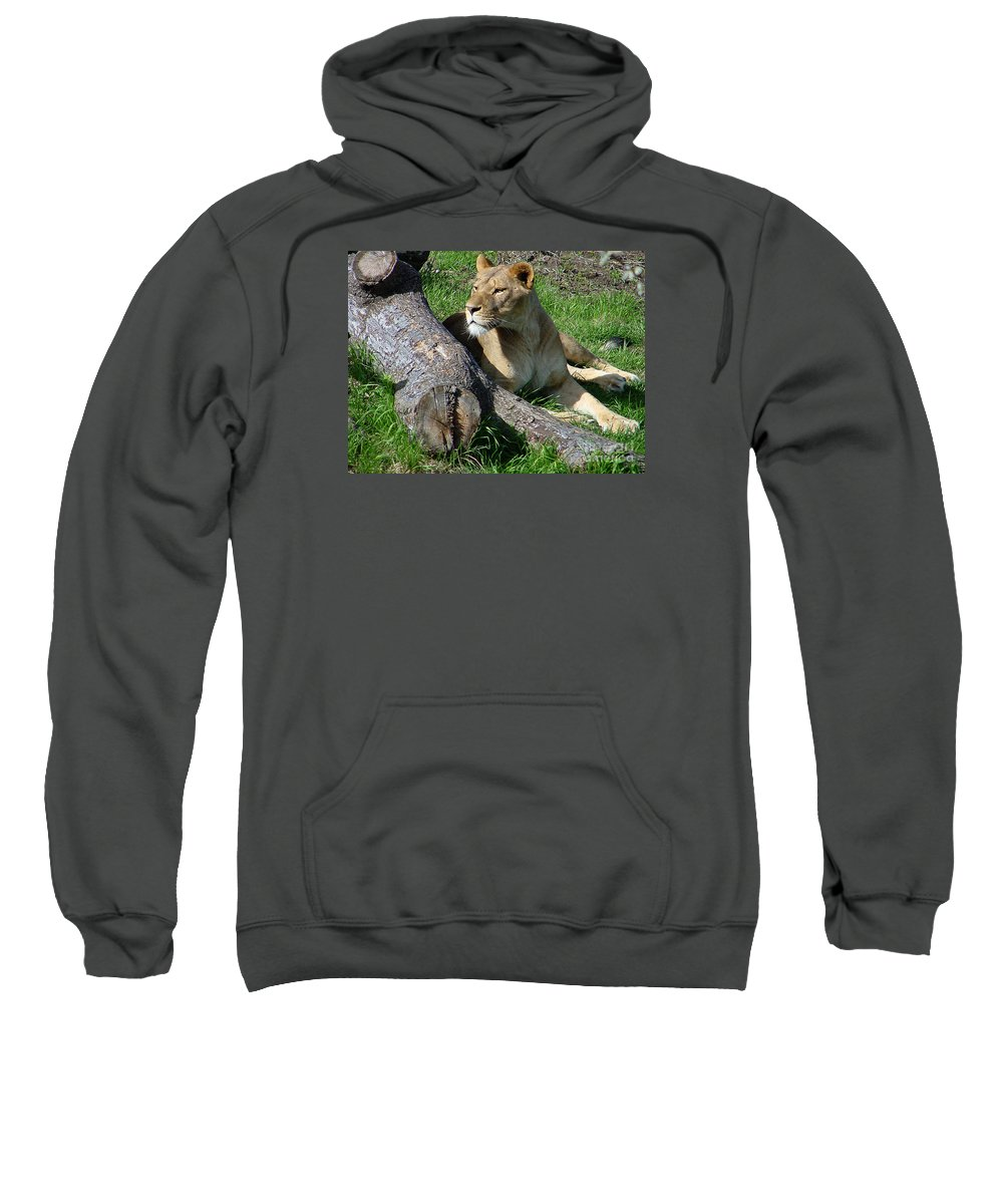 Lion Sweatshirt featuring the photograph Lioness2 by Gary Gingrich Galleries