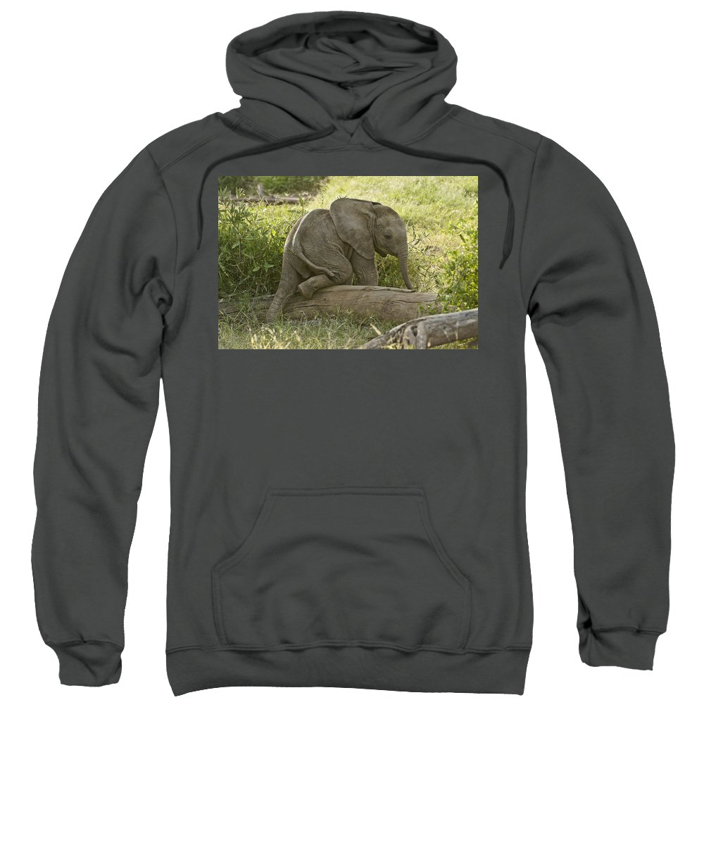 Africa Sweatshirt featuring the photograph Little Elephant Big Log by Michele Burgess