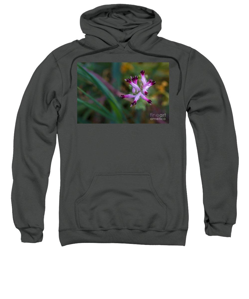 Sweatshirt featuring the photograph Little Flower 02 by Edgar Laureano