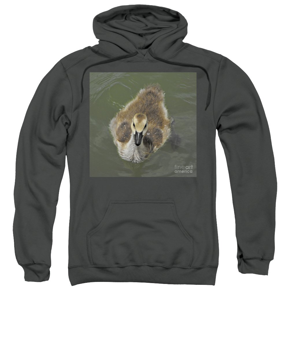 Duck Sweatshirt featuring the photograph Little Guy by Brandi Maher