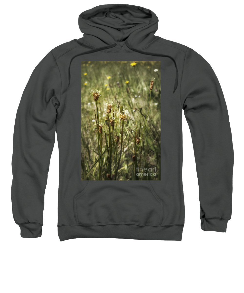 Weeds Sweatshirt featuring the photograph Little Weeds by Belinda Greb