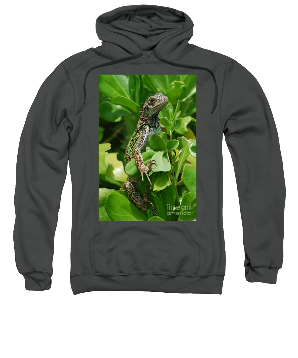 Lizard Sweatshirt featuring the photograph Lizard In Hedge by DejaVu Designs