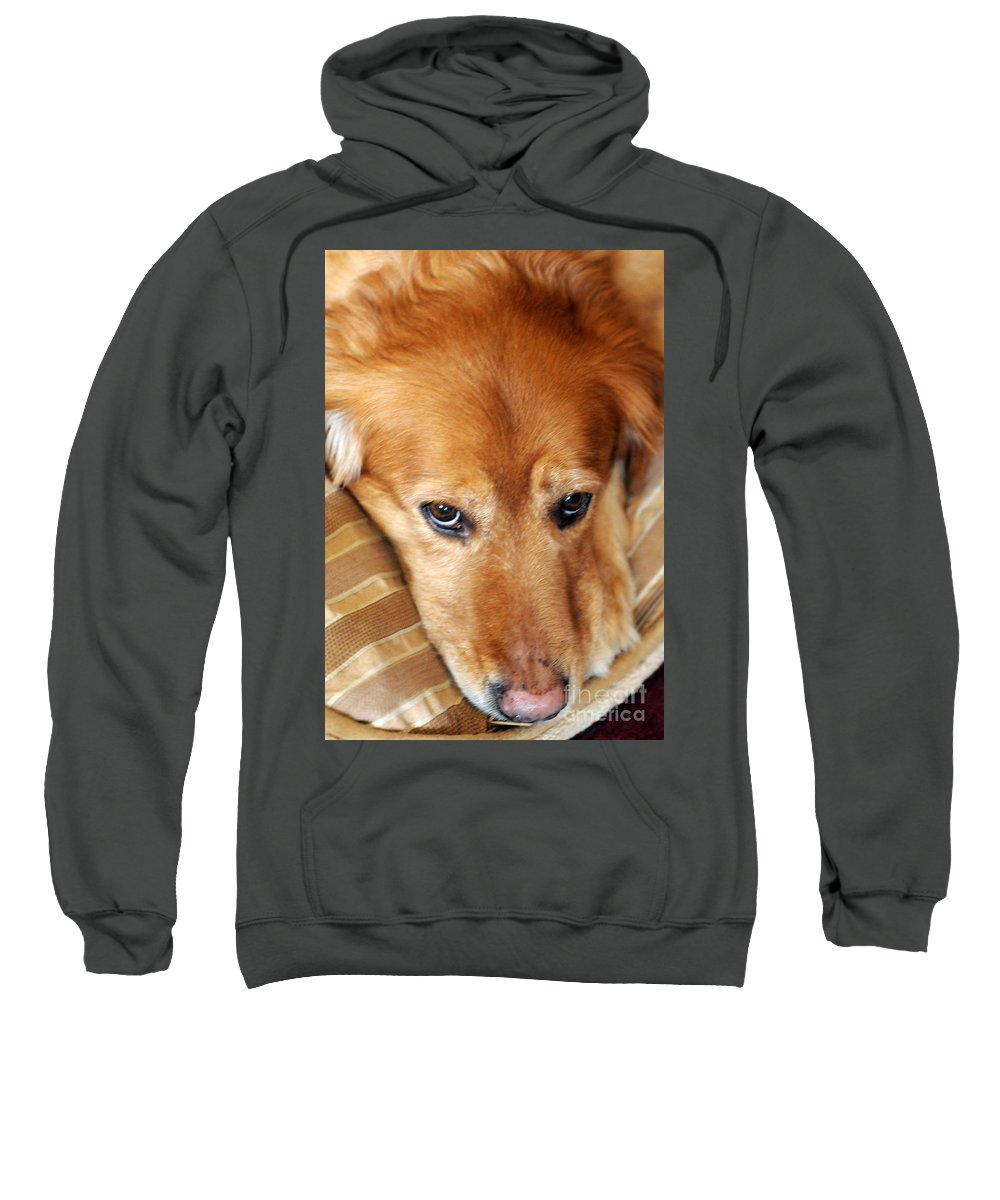 Dog Sweatshirt featuring the photograph Lizzy Golden Retriever by Kathleen Struckle