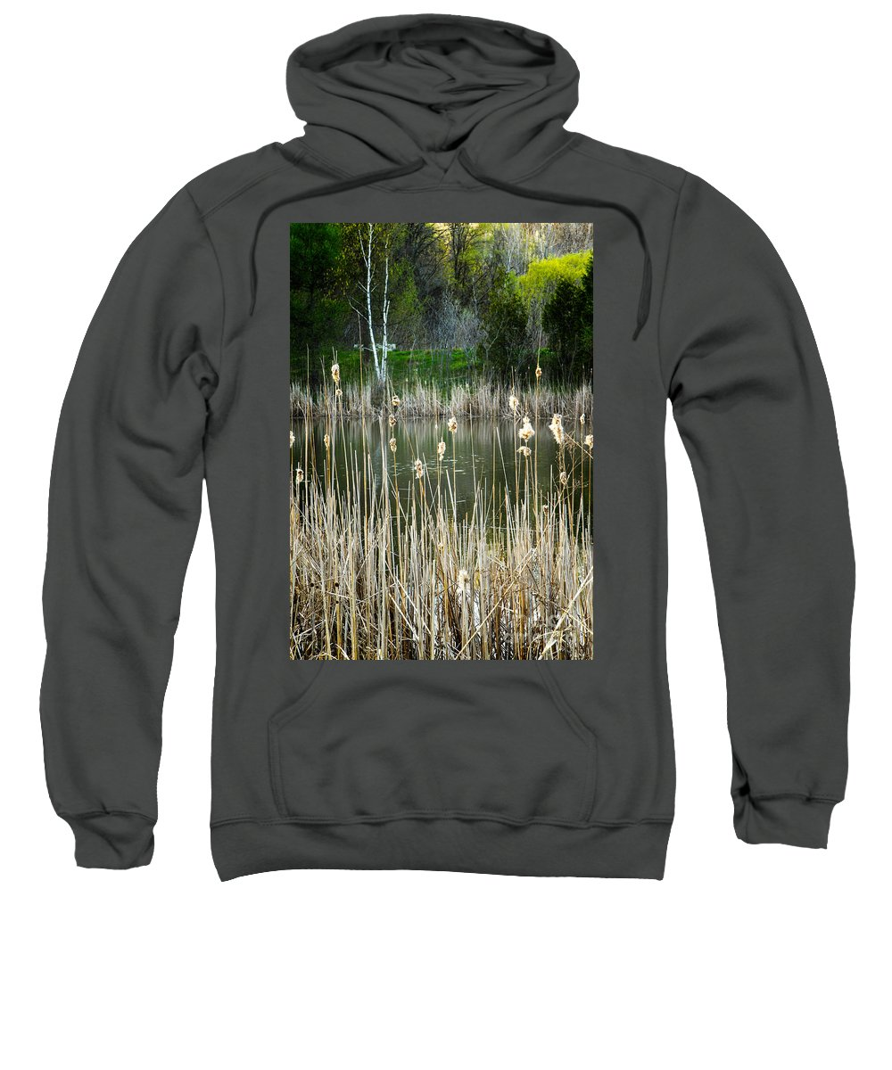 Birch Sweatshirt featuring the photograph Lone Birch by Mary Smyth