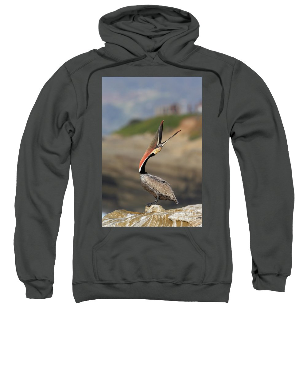Pelican Sweatshirt featuring the photograph Look At That by Bryan Keil