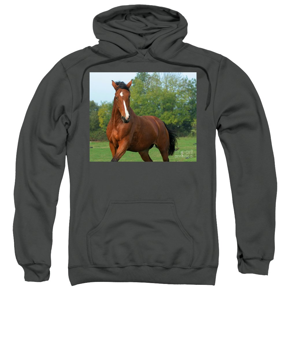 Horse Sweatshirt featuring the photograph Look How Pretty I Am by Angel Ciesniarska