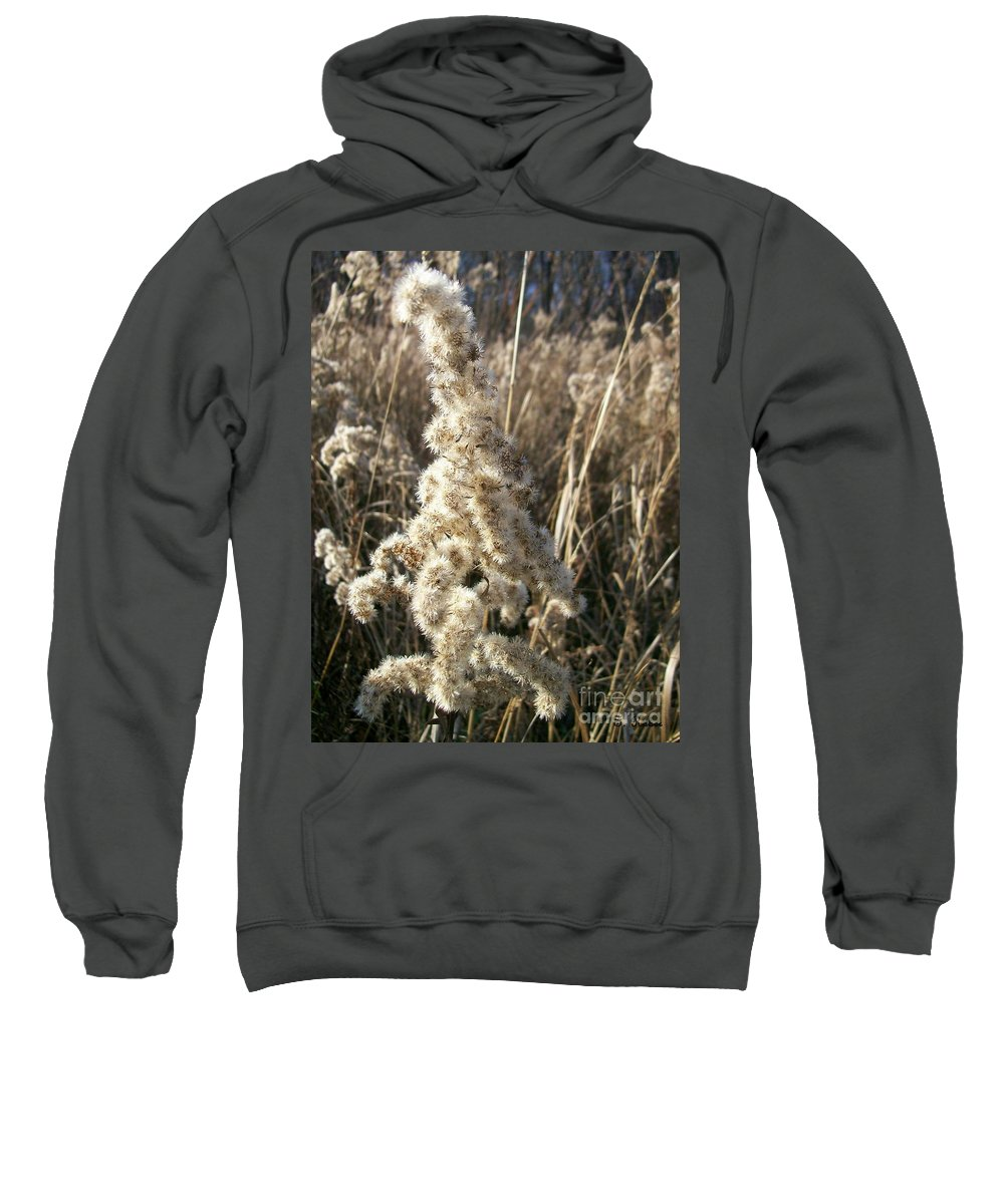 Weed Sweatshirt featuring the photograph Looks Like Cotton by Sara Raber