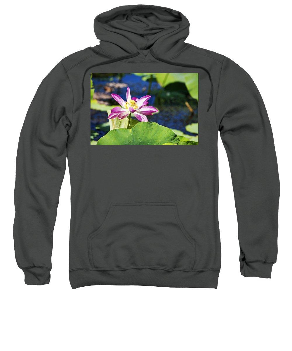 Lotus Flower Sweatshirt featuring the photograph Lotus Flower V6 by Douglas Barnard
