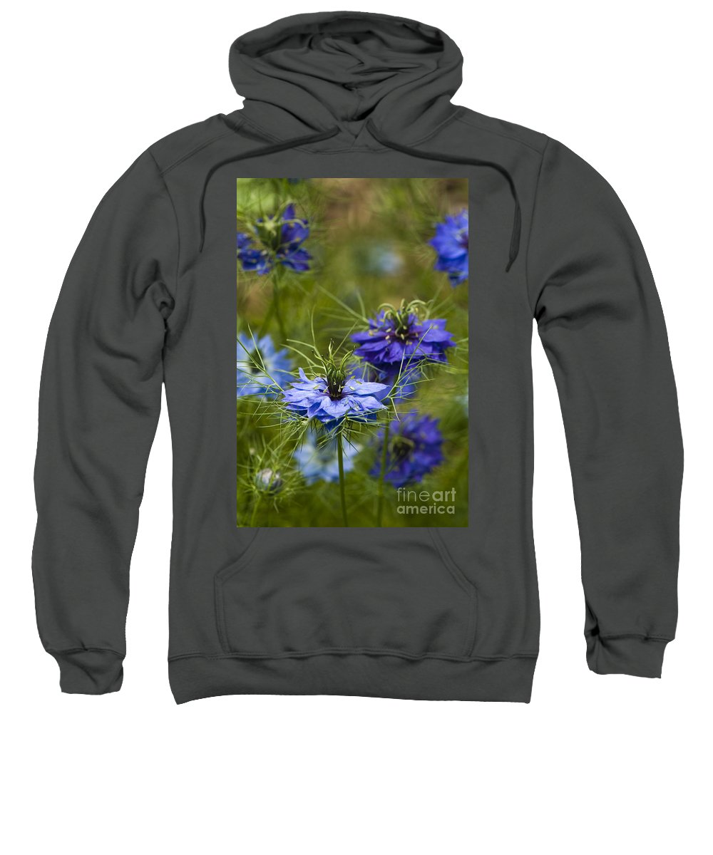 Garden Sweatshirt featuring the photograph Love In A Mist by Anne Gilbert