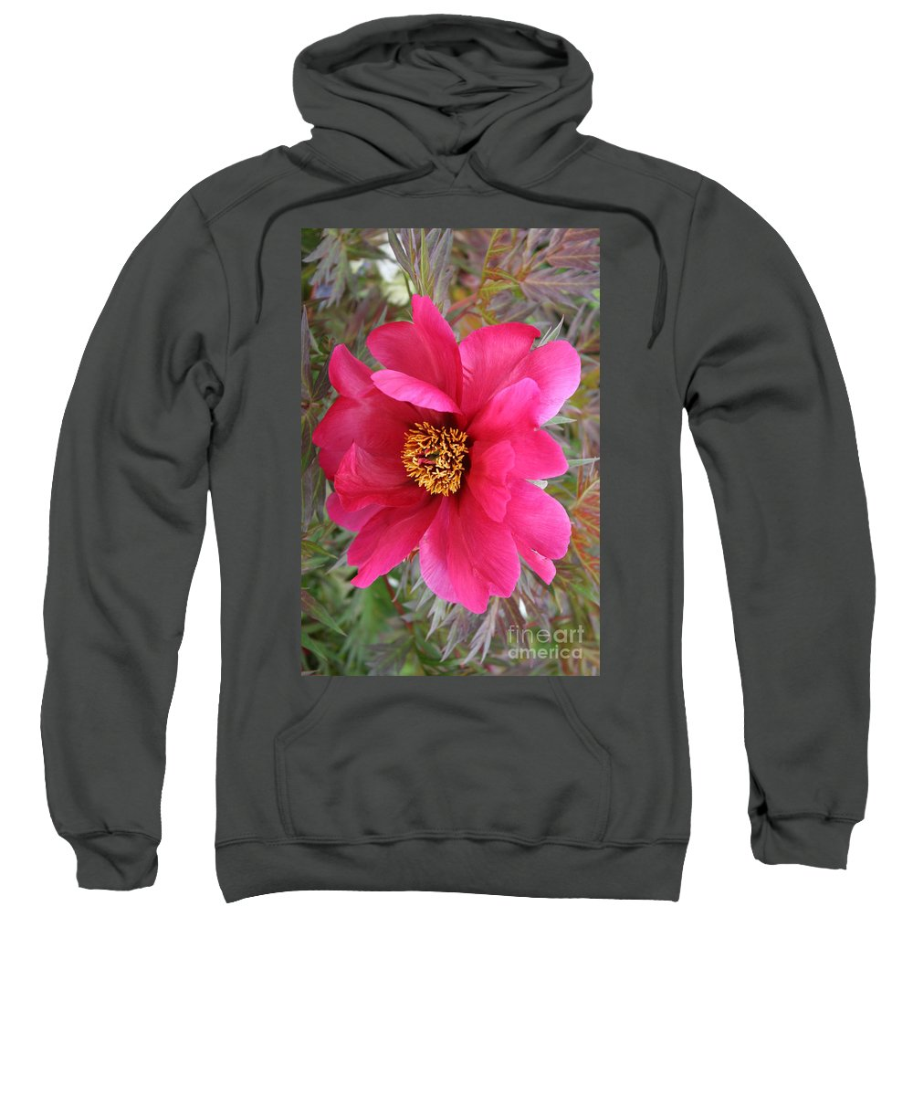 Peony Sweatshirt featuring the photograph Lovely Peony by Christiane Schulze Art And Photography