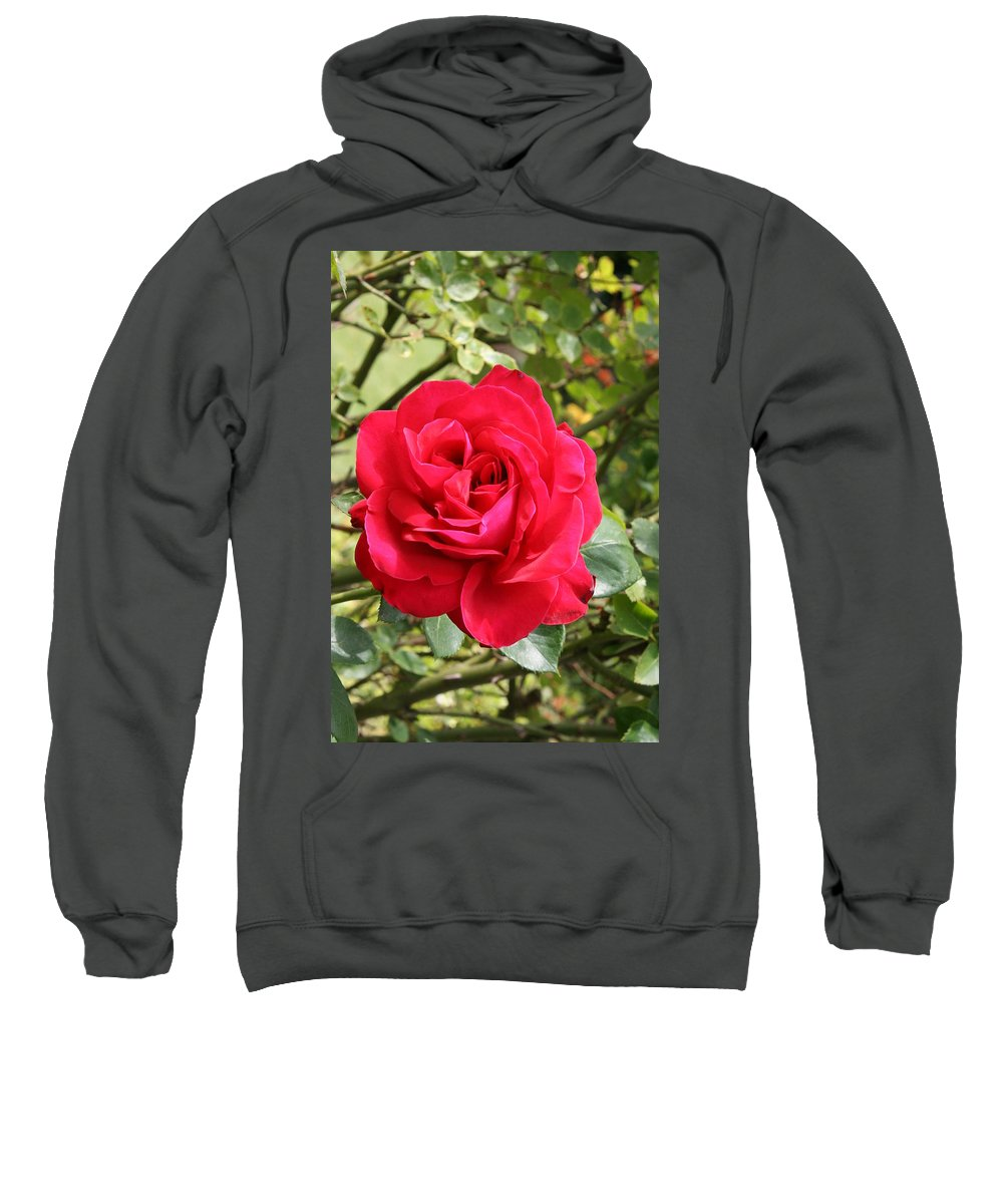 Rose Sweatshirt featuring the photograph Lovely Red Rose by Christiane Schulze Art And Photography