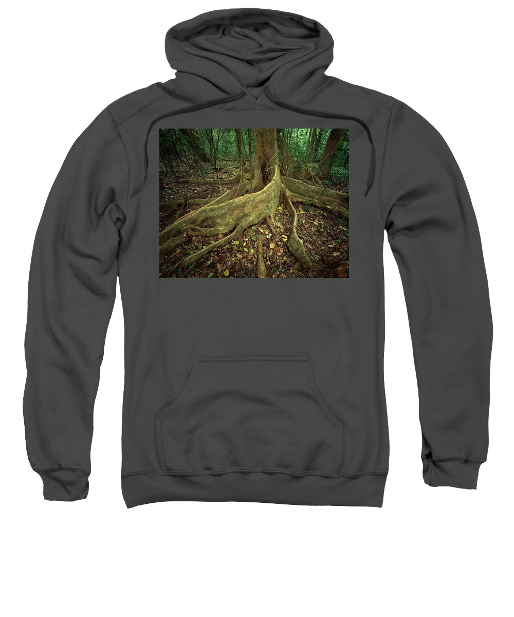 Ai Sweatshirt featuring the photograph Lowland Tropical Rainforest by Ferrero-Labat