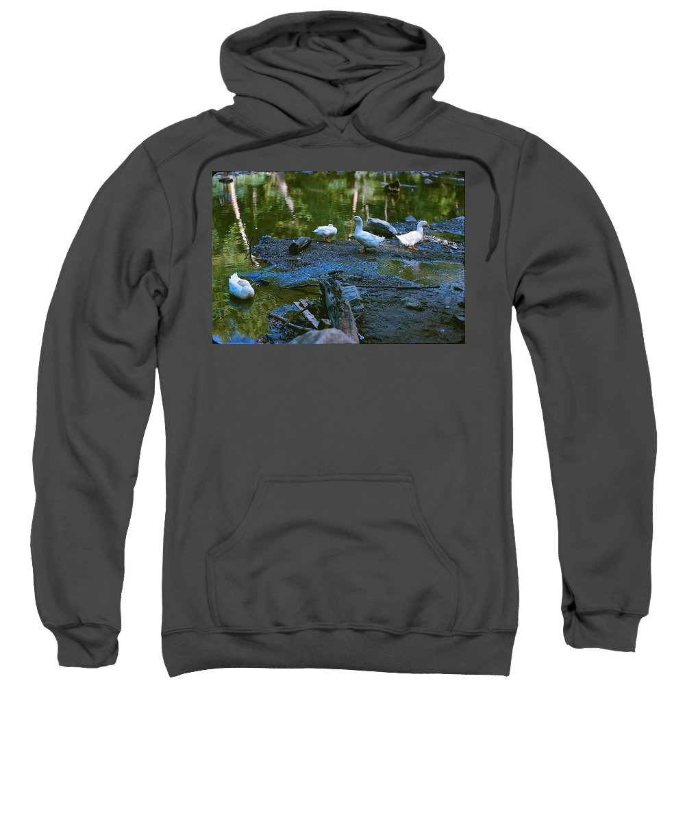 Ducks Sweatshirt featuring the photograph Lucky Ducks by Ira Shander