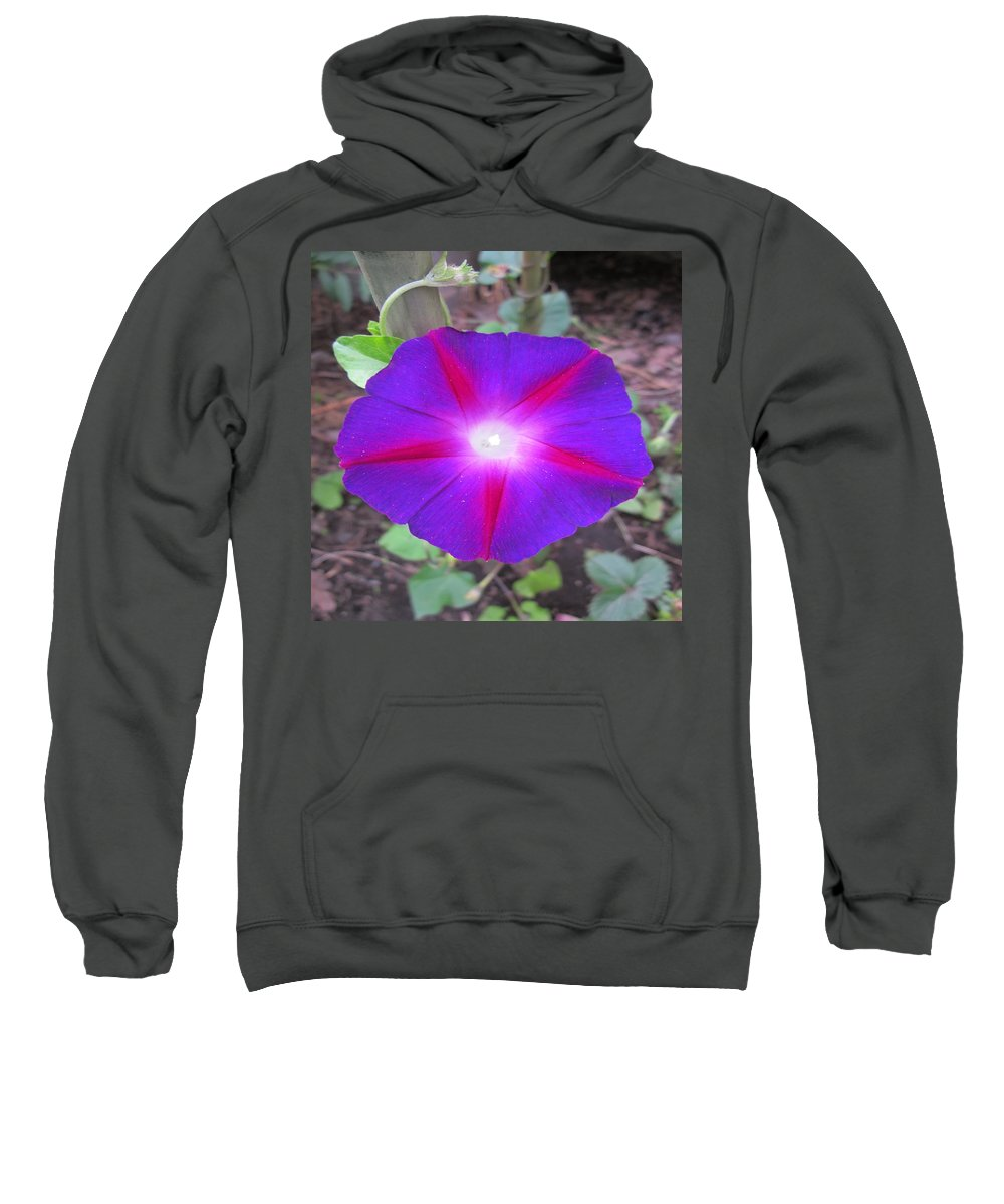 Morning Glory Sweatshirt featuring the photograph Luminous Morning Glory In Purple Shines On You by Rosita Larsson