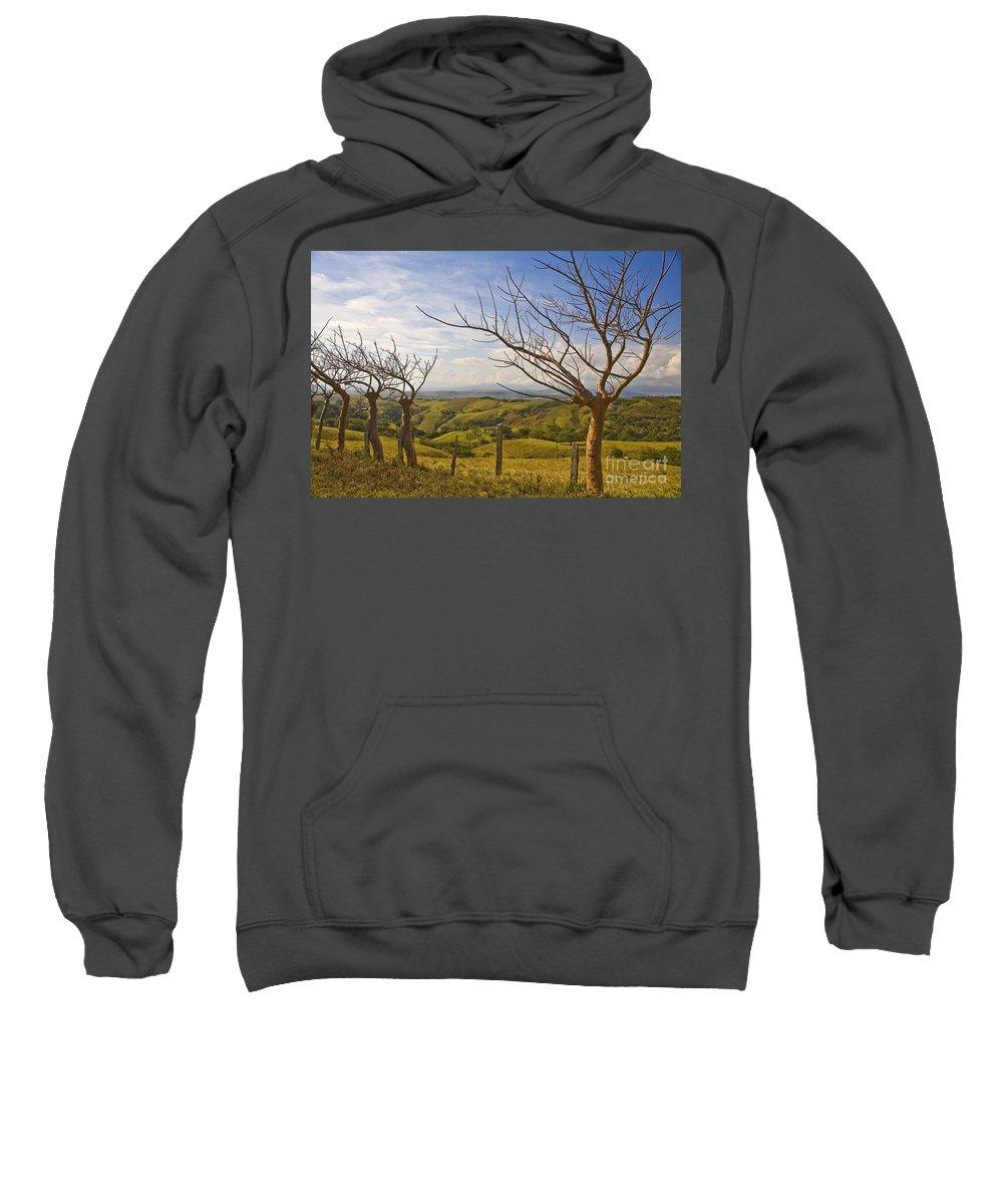 Landscape Sweatshirt featuring the photograph Lush Land Leafless Trees 2 by Madeline Ellis