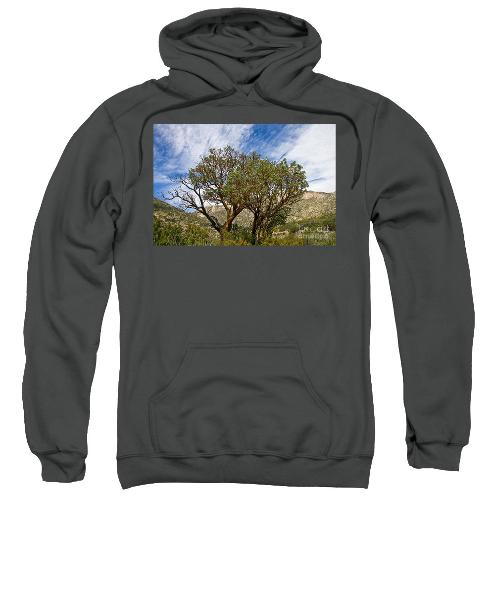 Guadalupe Mountains National Park Texas Mckittrick Canyon Trail Trails Madrone Tree Trees Mountain Landscape Landscapes Nature Nature Sweatshirt featuring the photograph Madrone Trees by Bob Phillips