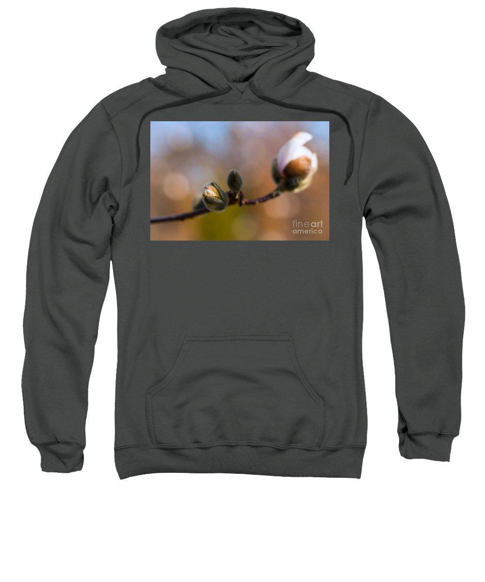 Magnolia Sweatshirt featuring the photograph Magnolia Season II by Mary Smyth