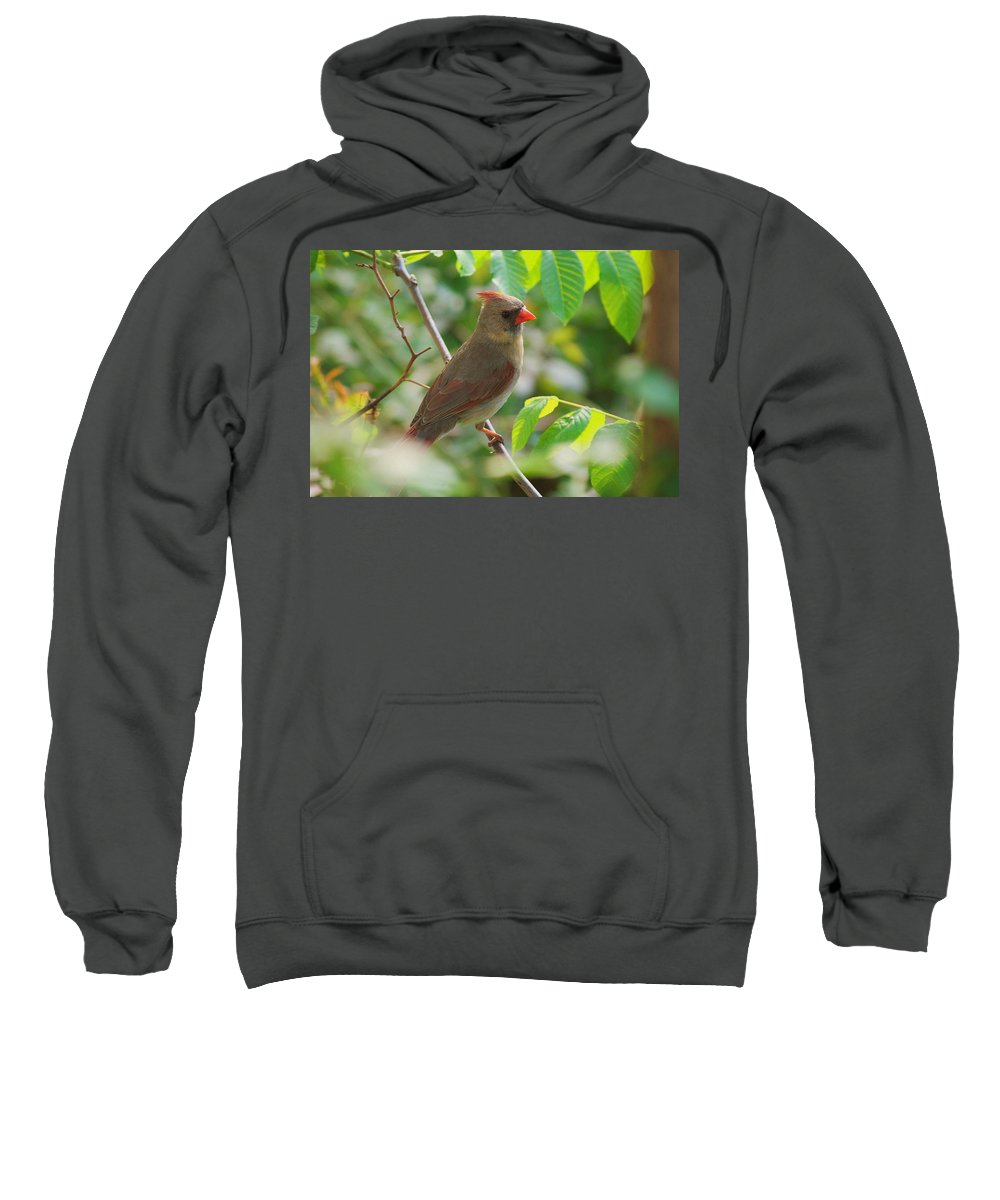 Cardinal Sweatshirt featuring the photograph Mama Cardinal by Frozen in Time Fine Art Photography