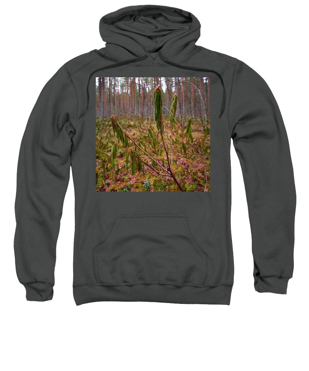 Finland Sweatshirt featuring the photograph Marsh Labrador Tea After Winter by Jouko Lehto