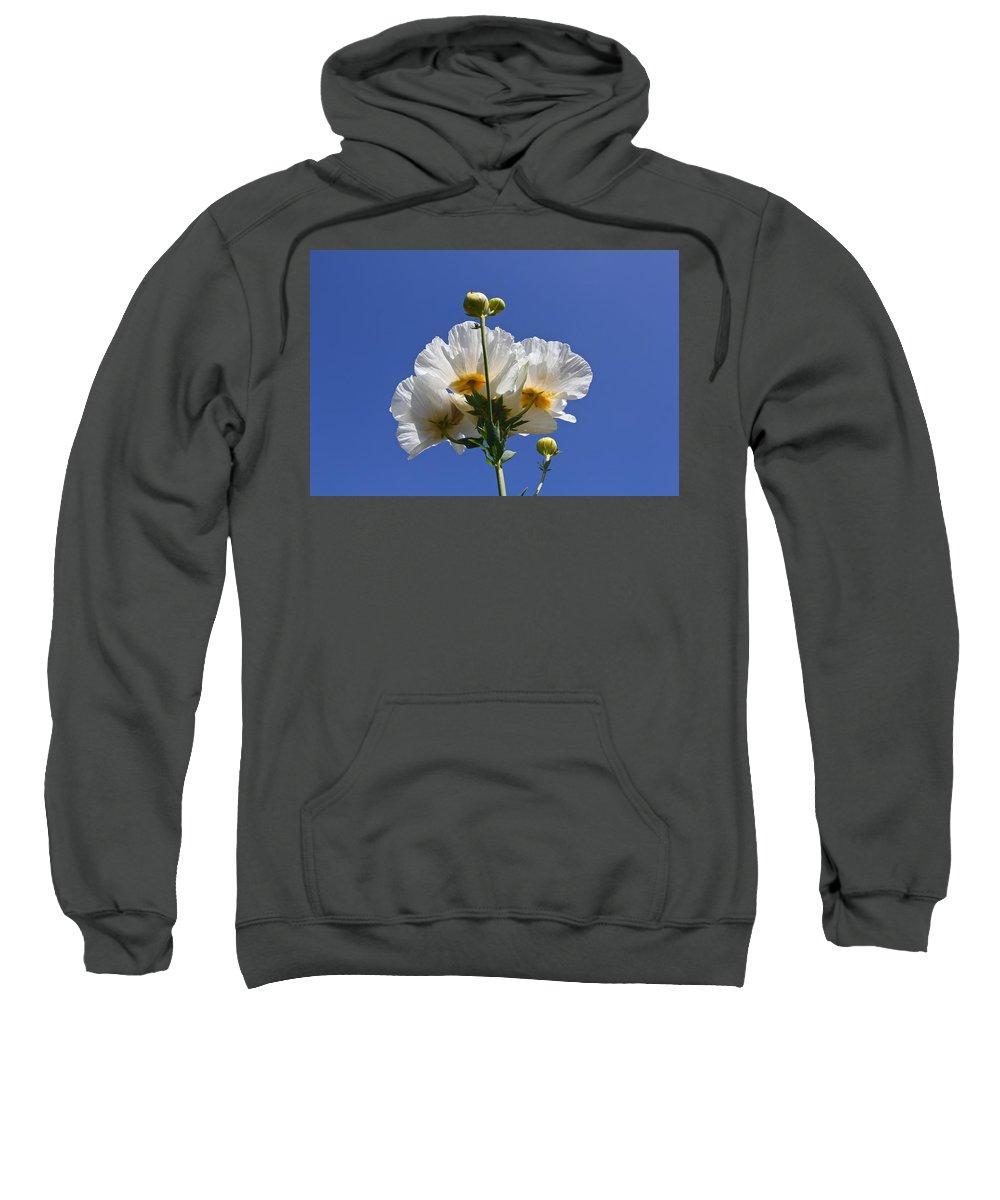 Flower Sweatshirt featuring the photograph Matilija Poppy by Denise Mazzocco