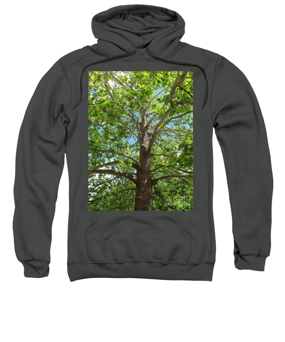 Mature Sycamore Tree Images Old Growth Sycamore Tree Photographs Giant Sycamore Tree Pics Big Sycamore Tree Large Sycamore Tree Old Growth Flora Old Growth Trees Sycamore Canopy Green Trees Forest Canopy Blue Sky Trees Big Trees Old Trees Sweatshirt featuring the photograph Mature Sycamore by Joshua Bales