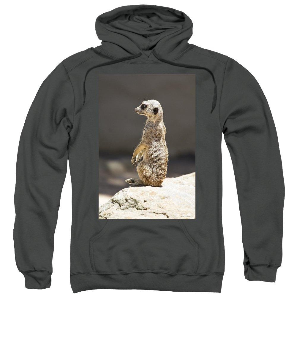 Meerkat Sweatshirt featuring the photograph Meerkat Manor V5 by Douglas Barnard