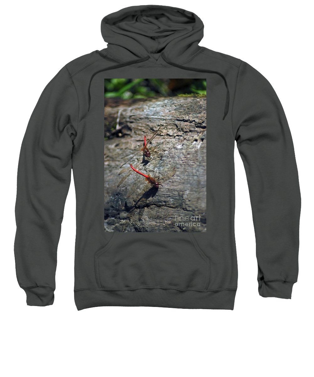 Dragonflies Sweatshirt featuring the photograph Meeting by Joseph Yarbrough