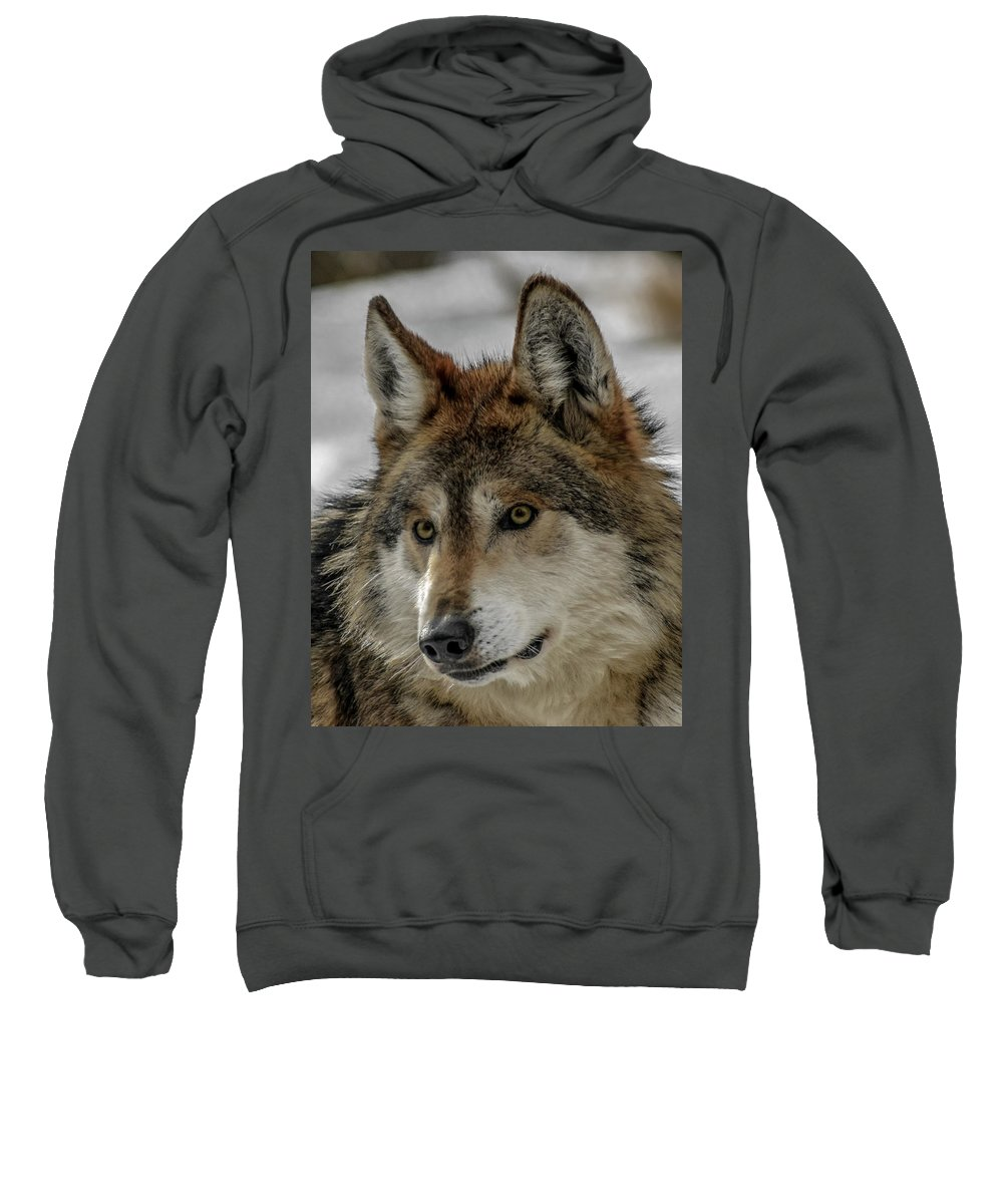 Wolf Sweatshirt featuring the photograph Mexican Grey Wolf Upclose by Ernie Echols